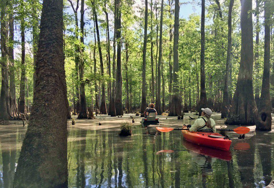 Field Trips | Mississippi Coast Audubon Society